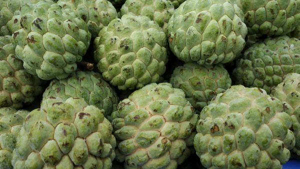 custard apple custard apple benefits custard apple tree custard apple in hindi custard apple calories custard apple plant custard apple nutrition custard apple in tamil custard apple deutsch custard apple during pregnancy