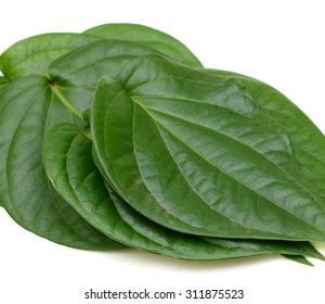 Betel is a medicinal herb. Betel nut can stimulate appetite. Betel nut can be used to relieve colic, stomach upset and relieve indigestion. Generally cough - Betel leaves have medicinal properties that can cure colds, asthma, bronchial allergies, rheumatism, lungs and ulcers.